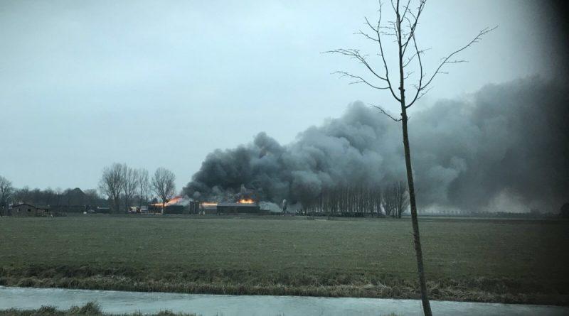 Kalveren omgekomen bij grote brand in stal Zwaagdijk-Oost