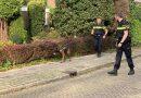 BURGERNET: Politie zoekt 2 daders vanwege een overval