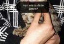 Kittens aangetroffen in berm, politie zoekt getuigen